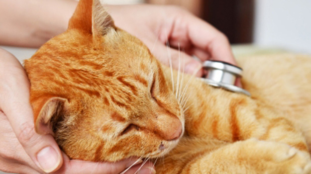 Make your veterinary career a success