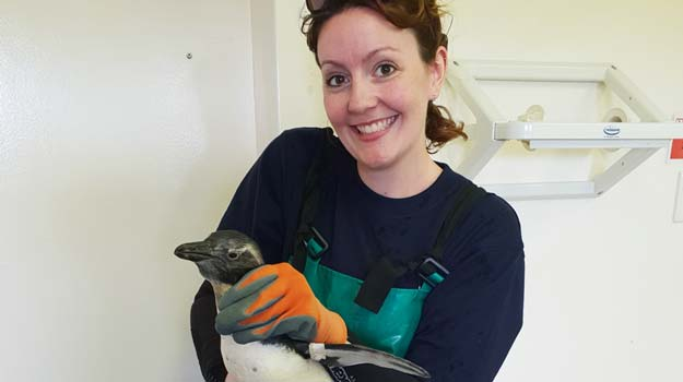 Amelia had her hands full with the centre's pengui