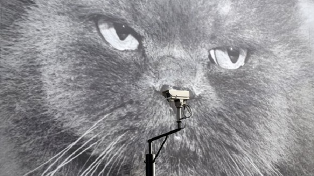 Cat's eyes: it is claimed we are the most spied up